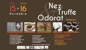 Nez truffe 2